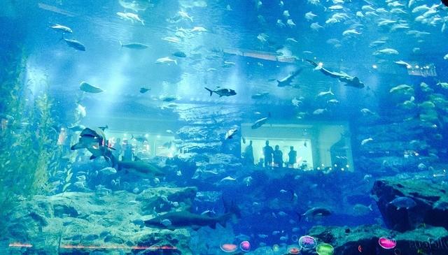 explore dubai aquarium
