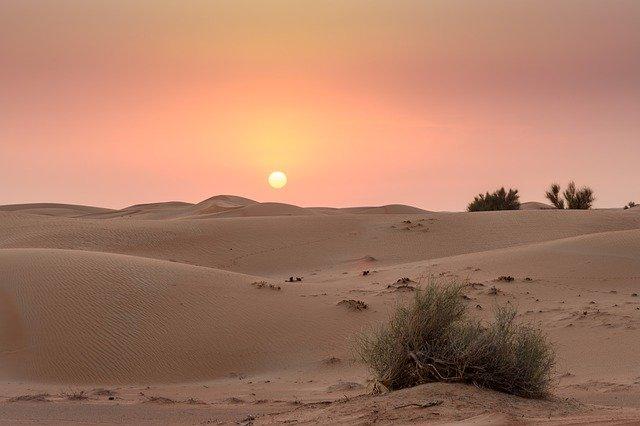 explore-the-wonder-of-the-desert